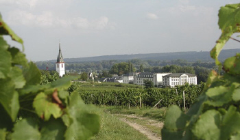 Weingut-Schloss-Reinhartshausen5 in Schlosshotel und Weingut: Schloss Reinhartshausen